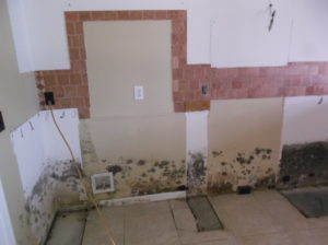 tampa mold removal