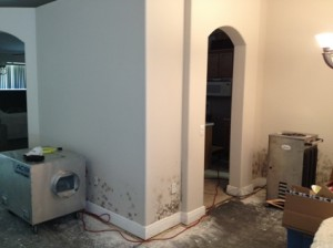 Mold Removal New Port Richey FL